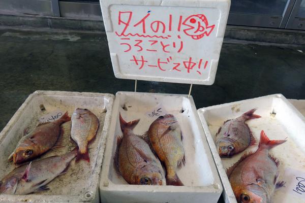伊里漁業協同組合「真魚市(まないち)」